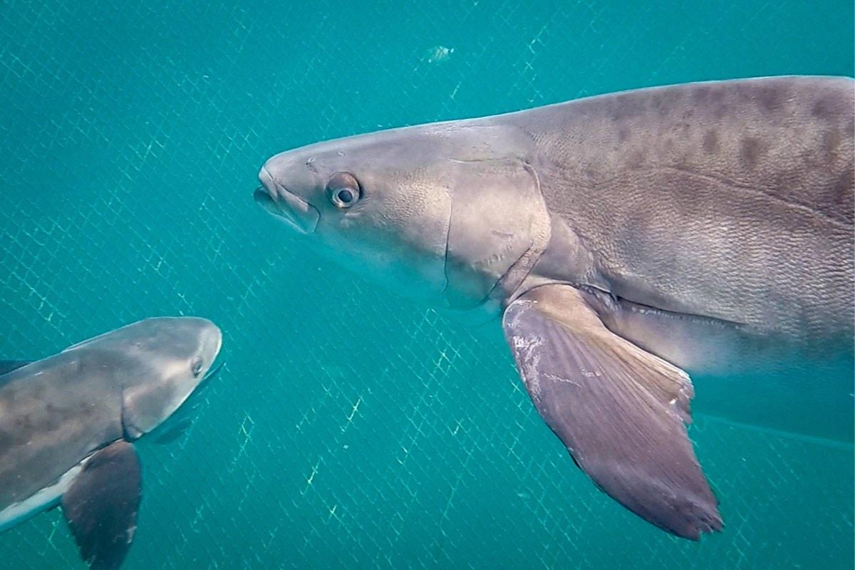 eduardo-sardinha-ipemar-ilha-grande-20
