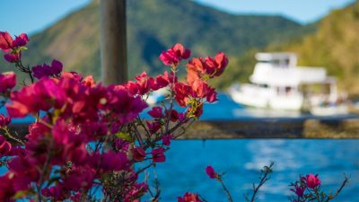 eduardo-sardinha-ipemar-ilha-grande-7983